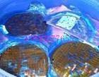 半导体硅片,蓝膜片,抛光片(图)销售