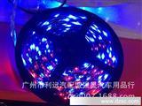 厂家直销LED软条灯 12V LED防水软条灯 5米3528滴胶灯带